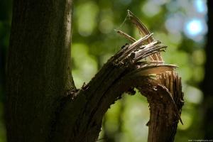 broken-branch